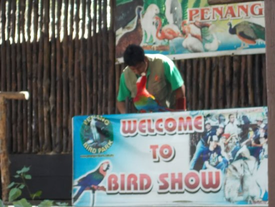 """Perai, Malezya: The """"bird show"""" at about 3 30 pm (a bird showing some skill)"""