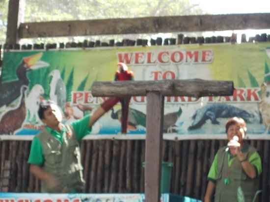 """Perai, Malezya: The """"bird show"""" at about 3 30 pm (a showman, a bird & the announcing lady)"""