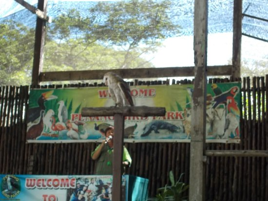 """Perai, Malezya: The """"bird show"""" at about 3 30 pm (a bird & the announcing lady)"""