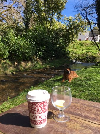 Avoca, İrlanda: No need for a bowl of water here!