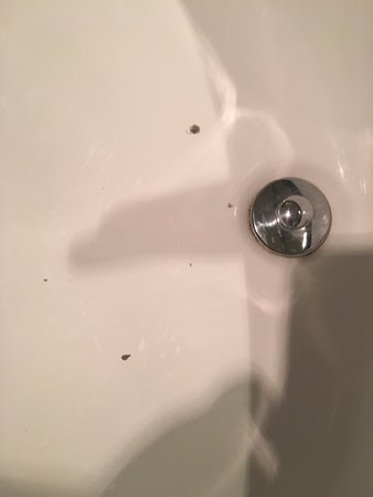 North Attleboro, MA: dirt in the sink