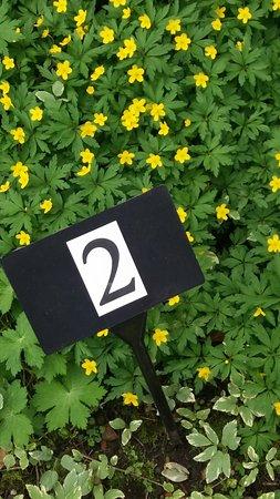 Anemone in the Stillingfleet Lodge Gardens