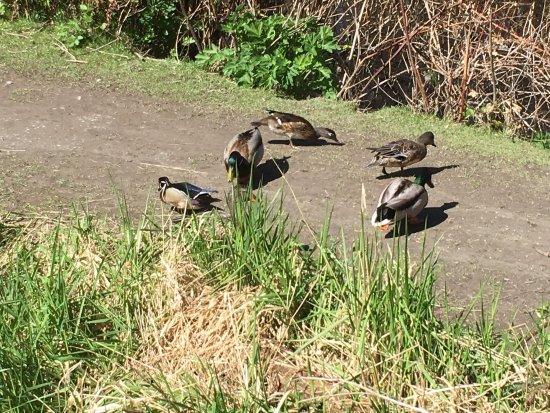 Delta, Canada : George C. Reifel Migratory Bird Sanctuary