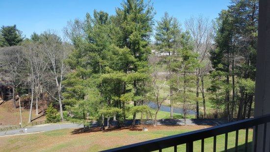Crowne Plaza  Resort Asheville : View from room of surrounding woods and golf course