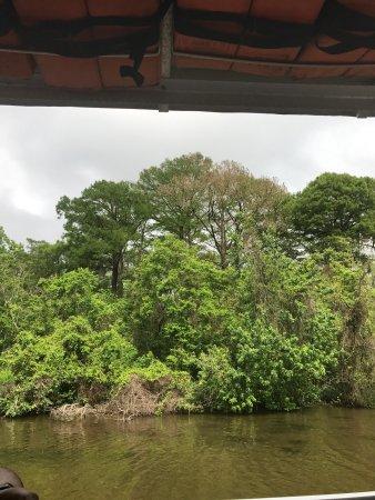 Swamp Tours In Westwego La