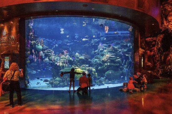 las vegas casino with aquarium