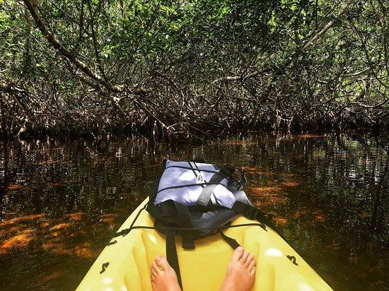Foto de Key West Eco Tours