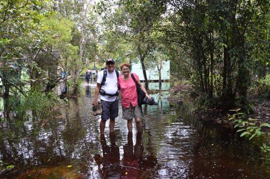 Rimba Orangutan Eco Lodge: getting down with nature