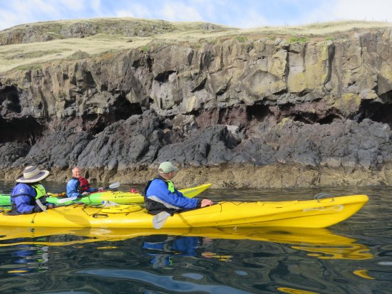 Pohatu Penguin Habitat: Seal-spotting from the kayaks