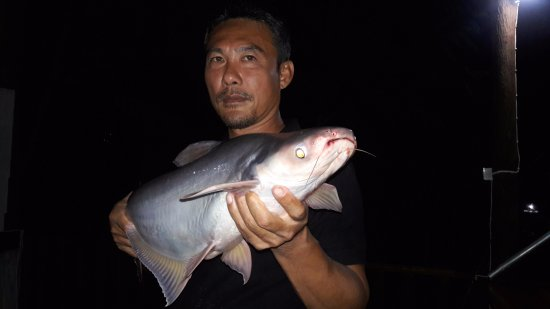 Palida  Resort: Fishing at Palida Resort lake. This is the best fishing lake on Koh phangan ,