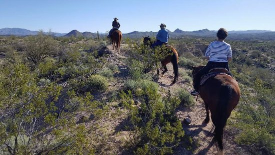 Arizona Horse Company: out in the open