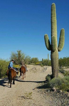 Arizona Horse Company: riding by Arizona's icon