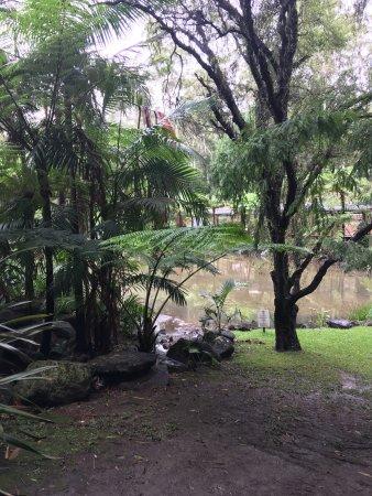 Tamborine Mountain, Австралия: photo1.jpg