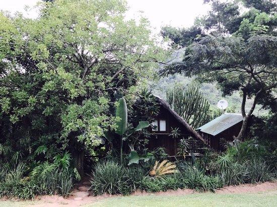 Tree House River Lodge: TreeHouse Lodge