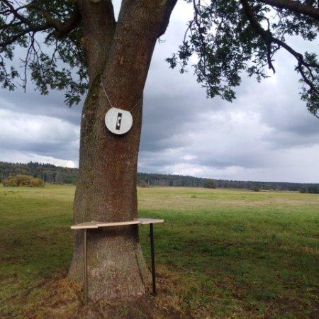Mecklenburg-Vorpommern, Tyskland: Der Palaver-Baum