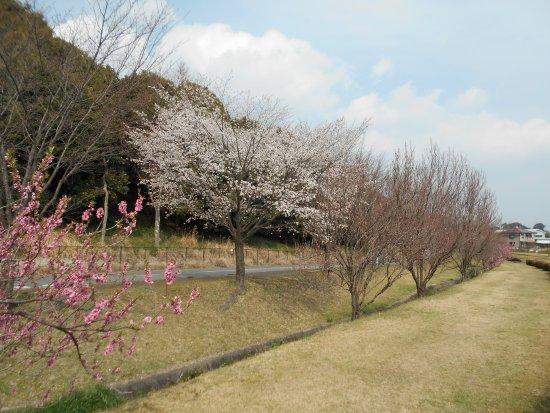 Kinryu Park