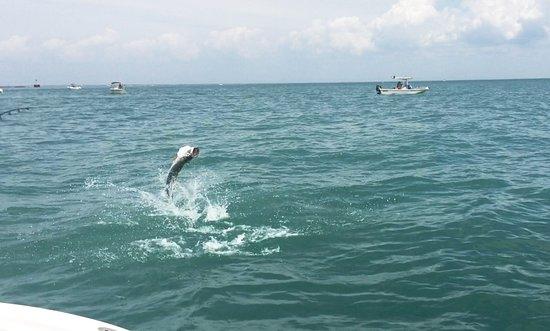 Boca Grande, Flórida: Tarpon jumping