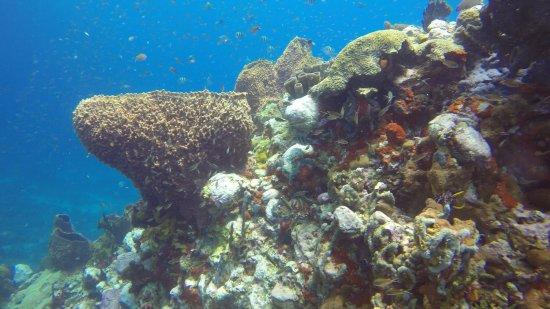 Scuba Steve's Diving Ltd.: Keyhole Pinnacles dive site