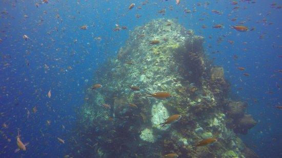Scuba Steve's Diving Ltd.: Plenty of fish