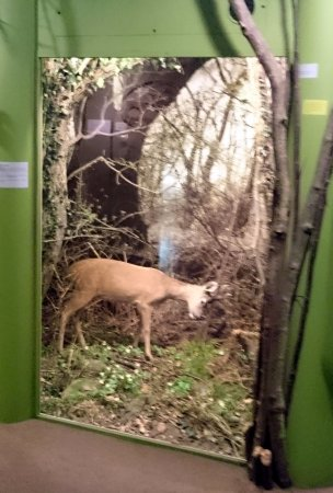 Holte, Danmark: A deer in the woods