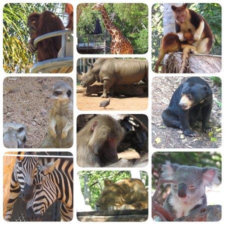 Perth Zoo: photo0.jpg