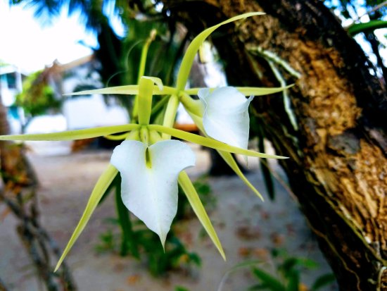 Colibri House: Orchids blooming all around!