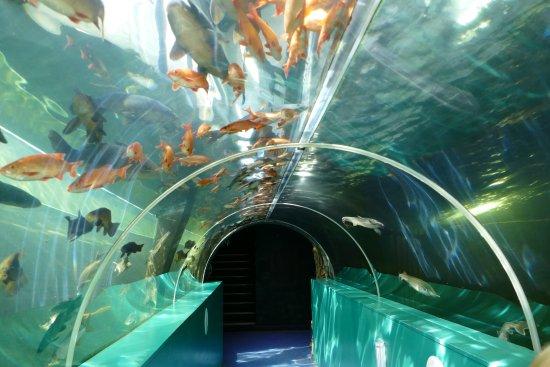 Lakes Aquarium