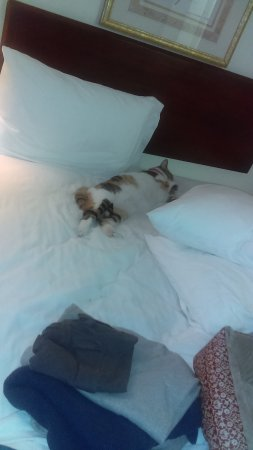 Dundee, MI: Had her own bed! No complaints!