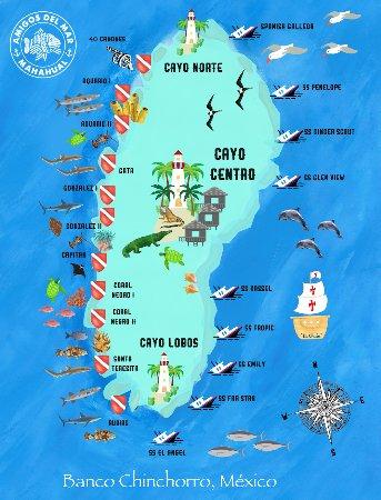 Banco Chinchorro Dive Sites Picture Of Amigos Del Mar Mahahual Tripadvisor
