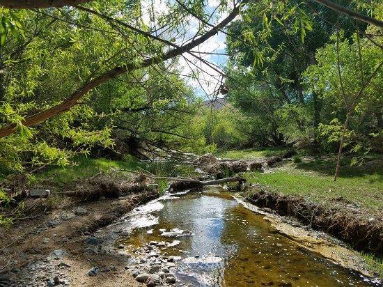Cordes Lakes, AZ: Riparian area