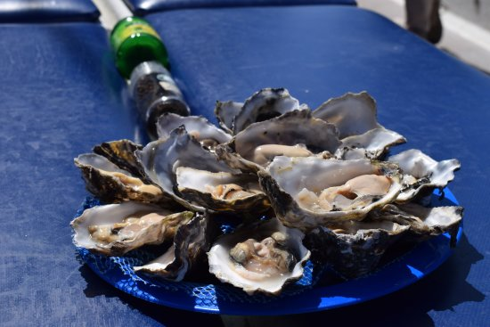 Dolphin Tours Namibia: Oysters to cap off a great day