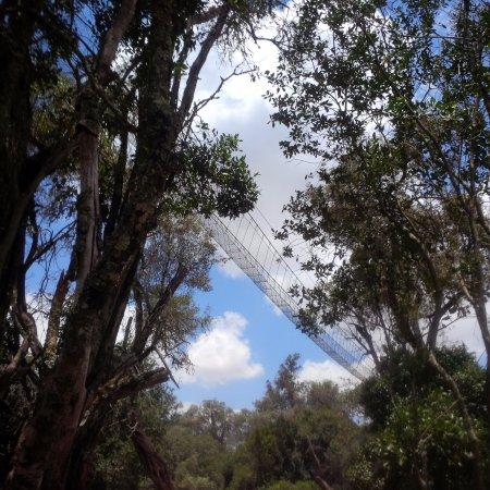 Наньюки, Кения: Canopy Walk 1 km long