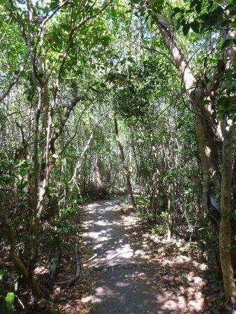 Gumbo Limbo Trail: before we got bitten by mosquitos