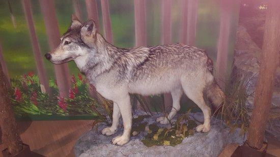 Edson, Канада: Wolf