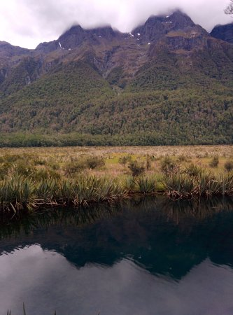 Fiordland National Park (Te Wahipounamu): Fiordland Park - Mirror Lake