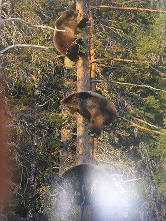 Martinselkonen Wilds Centre: bear watching poster
