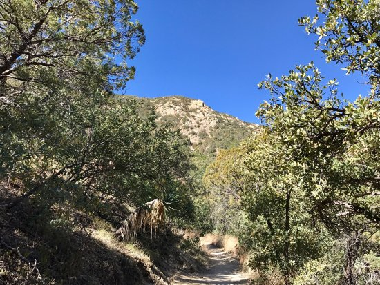 Madera Canyon: photo2.jpg