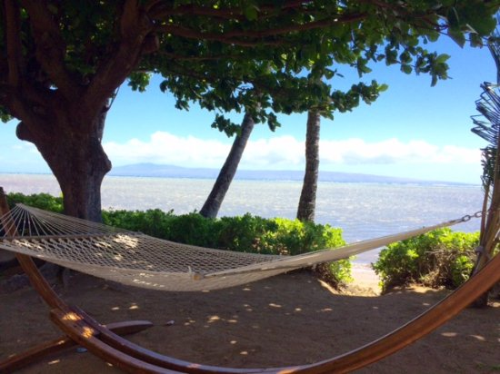 Kaunakakai, HI: Hung out on the hammock every day! And no one was waiting!
