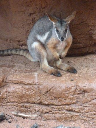 Wild Life Sydney Zoo Foto