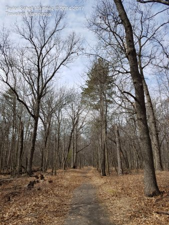 Bay City State Recreation Area: Wooded trail