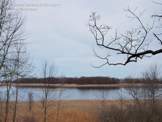 Bay City State Recreation Area: Tobico Marsh