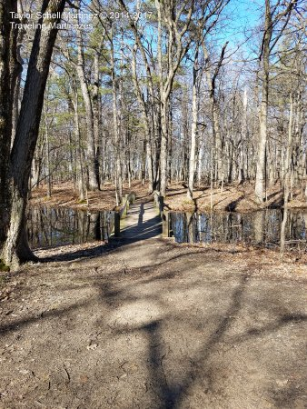 Bay City State Recreation Area: Creek beds along the trail