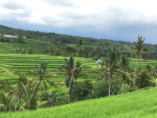Ziele picture of tegalalang rice terrace ubud for Tegalalang rice terrace ubud