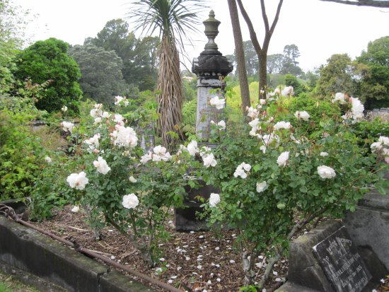 New Plymouth, New Zealand: December - roses