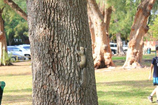 Kennedy Park : Esquilo