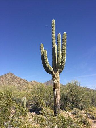 Phoenix Sonoran Desert Preserve