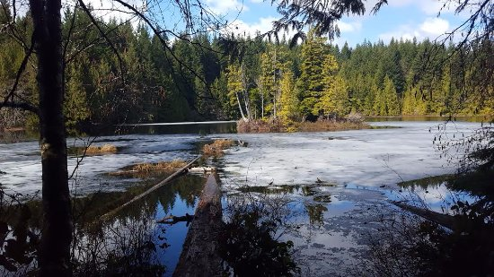 Alice Lake Provincial Park: Stump lake
