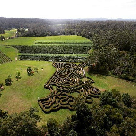 Wauchope, Αυστραλία: Get lost in our 2km long, 2m high Hedge Maze! Or sit and take in the view with a glass of wine!