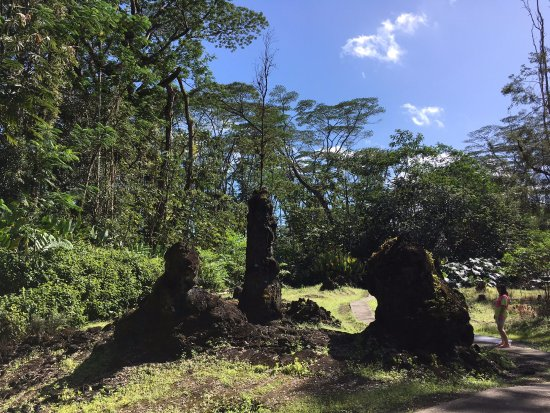 Pahoa, Hawái: Some lava trees large. Note person on cement trail on right side of lava trees.