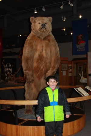 Scary Bear - Picture of University of Alaska Museum of the North ...